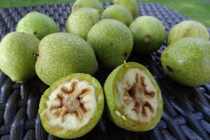 Grüne Nüsse