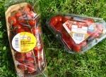 In der Tomaten-Zwickmühle: Billige Spanier oder teure Rheinländer?