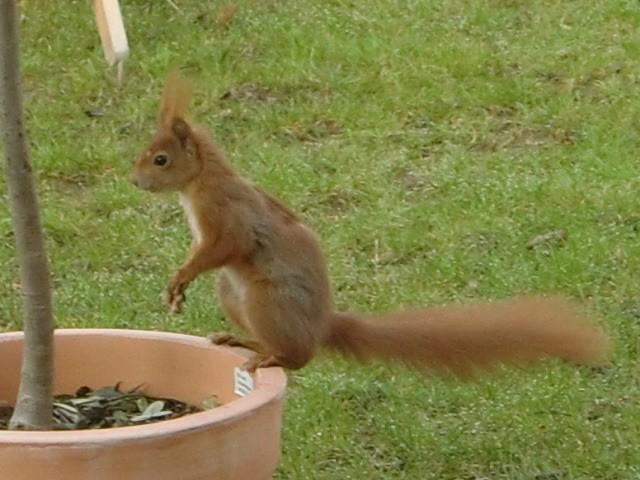 Feuchte Eichhörnchen Sexspielzeug, das ihr Quietschen macht