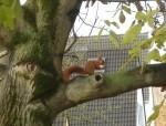 Jetzt die Walnüsse vor den Eichhörnchen retten
