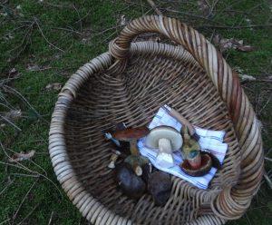 Unsere ersten selbst gesammelten Pilze! Foto: Freitag-Ziegler