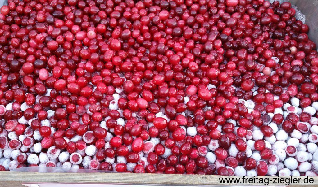 800 Tonnen Cranberries pro Jahr