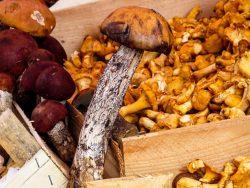 mushrooms-1603666_1280