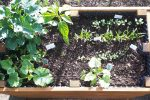 Hochbeet von oben mit Pflanzen
