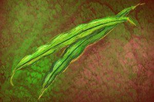zwei grüne Bohnen auf braunem Hintergrund