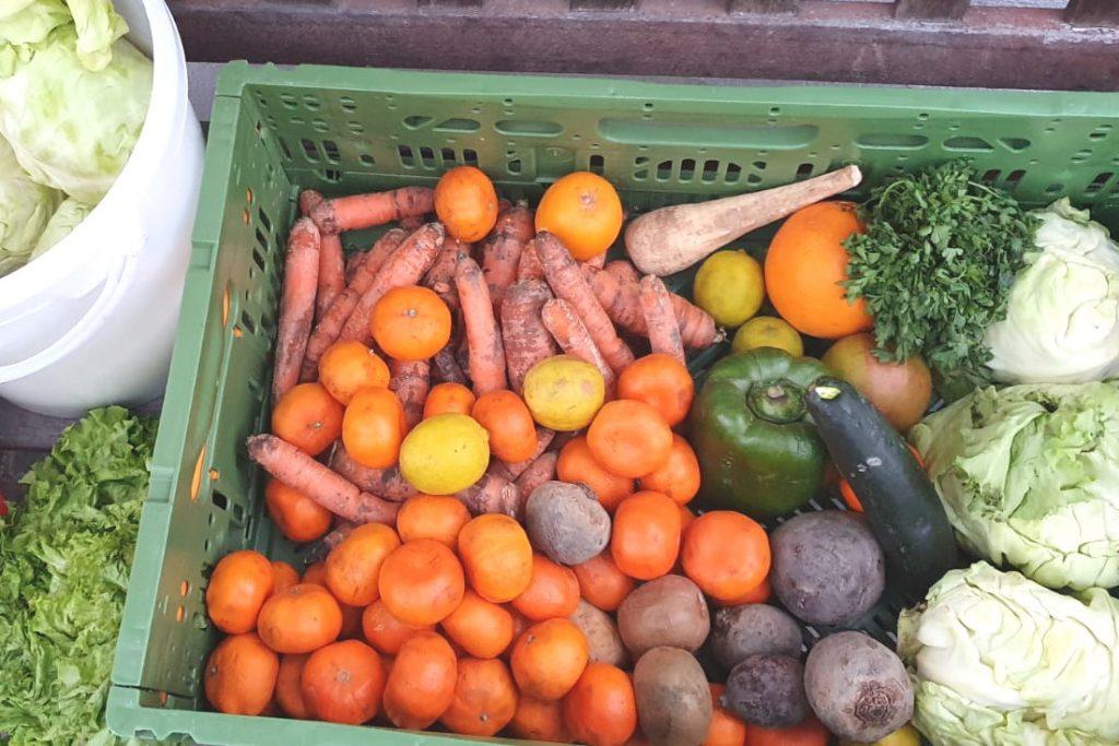 Kiste mit geretteten Mandarinen, Möhren und anderem Gemüse